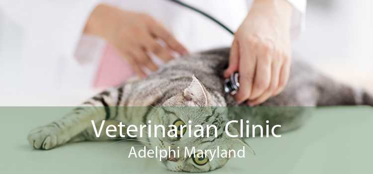 Veterinarian Clinic Adelphi Maryland