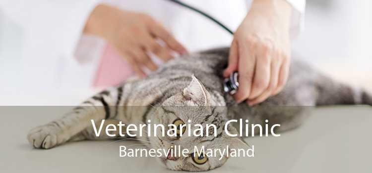 Veterinarian Clinic Barnesville Maryland