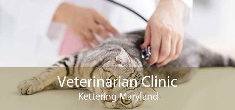 Veterinarian Clinic Kettering Maryland