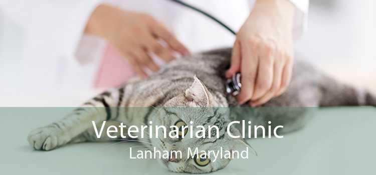 Veterinarian Clinic Lanham Maryland