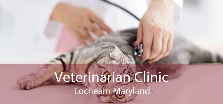 Veterinarian Clinic Lochearn Maryland