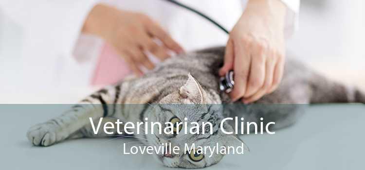 Veterinarian Clinic Loveville Maryland